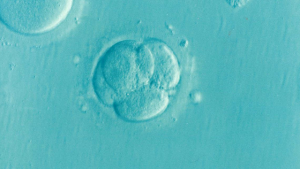 embryos, family law, divorce, IVF